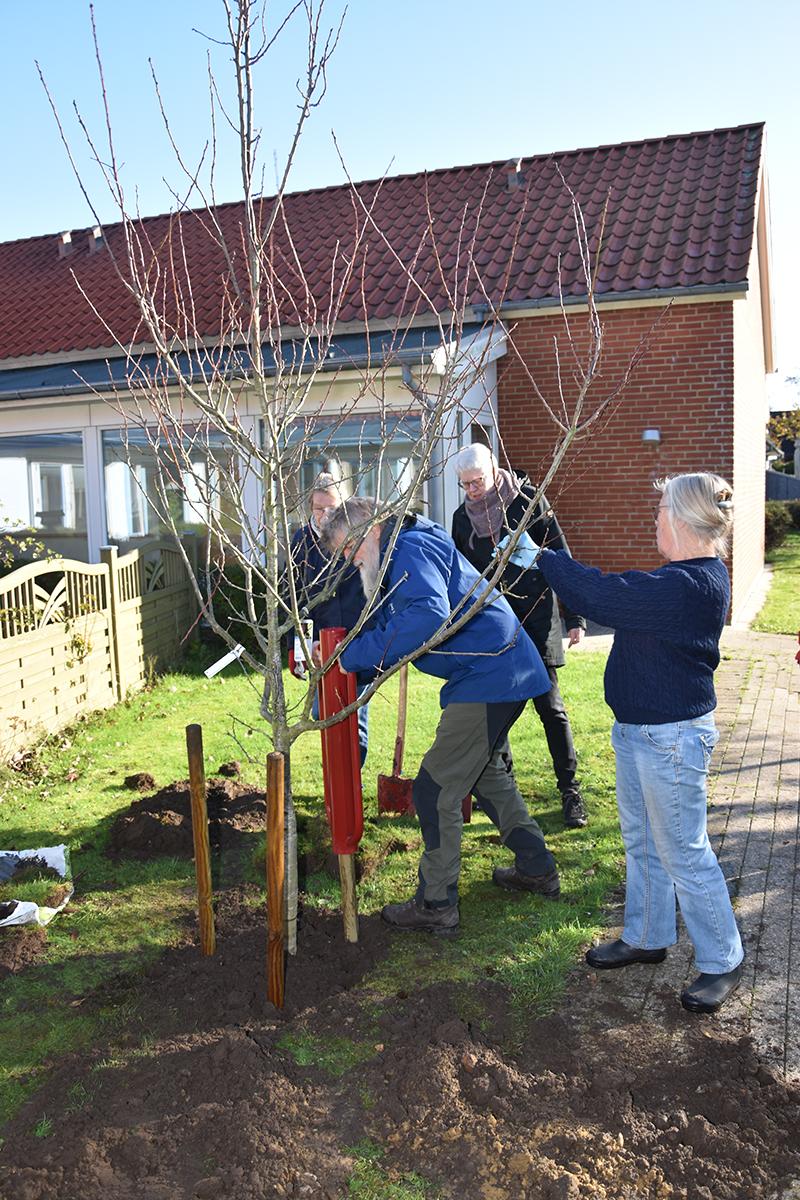 Leif Wagner Jørgensen, formand for DN Esbjerg, hamrer pæle i ved træplantningen.