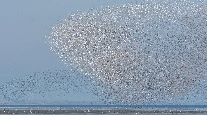 De store fugleflokke er noget af det, der fascinerer turisterne.